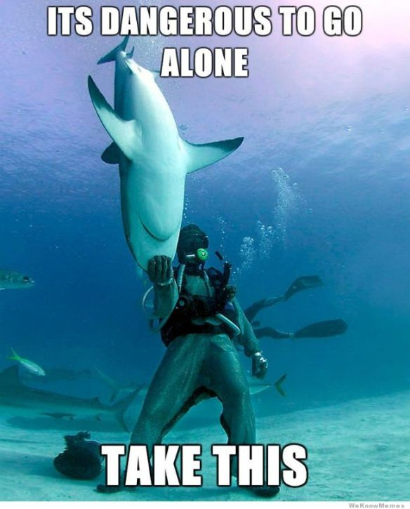 its-dangerous-to-go-alone-shark