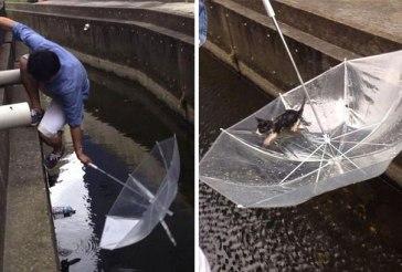 umbrellakitten